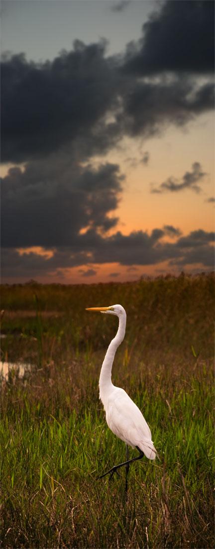 Miami, Florida Area Wildlife : Spring 2008