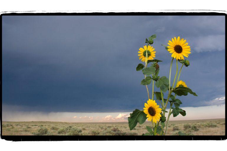 Pawnee Grasslands, Colorado
