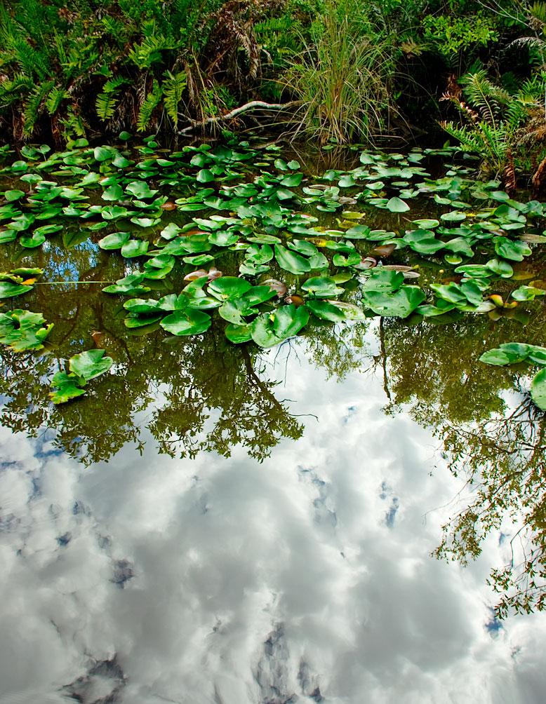 Cloud Reflection: Everglades