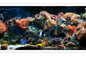 Reef Tank Photography