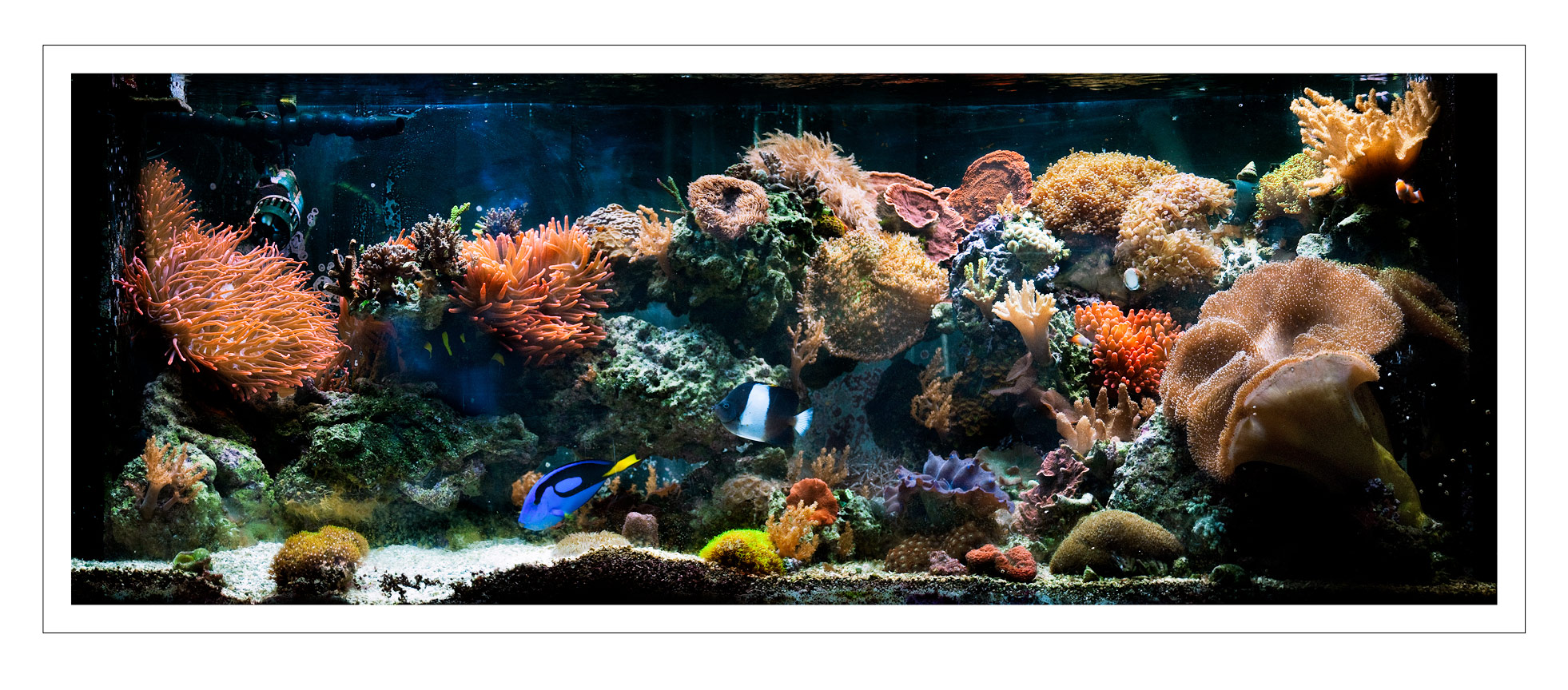 Reef Tank Photography