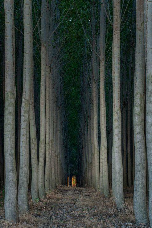 Tree Farm, by Matthew Gore