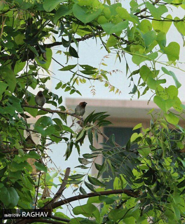 Photo by Raghav. Bird framed by branches.