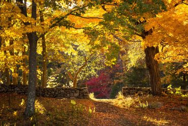Fall colors at Weir Farm, Wilton CT