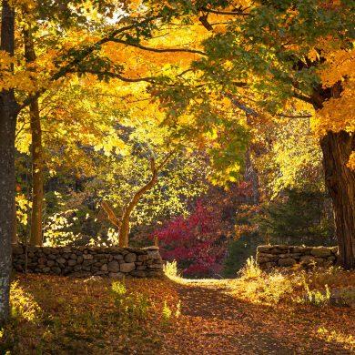 Fall colors at Weir Farm, Wilton CT
