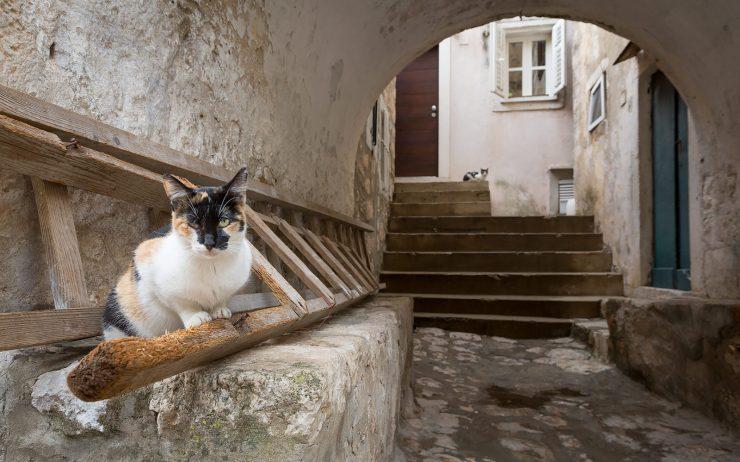 dubrovnik cat in ladder