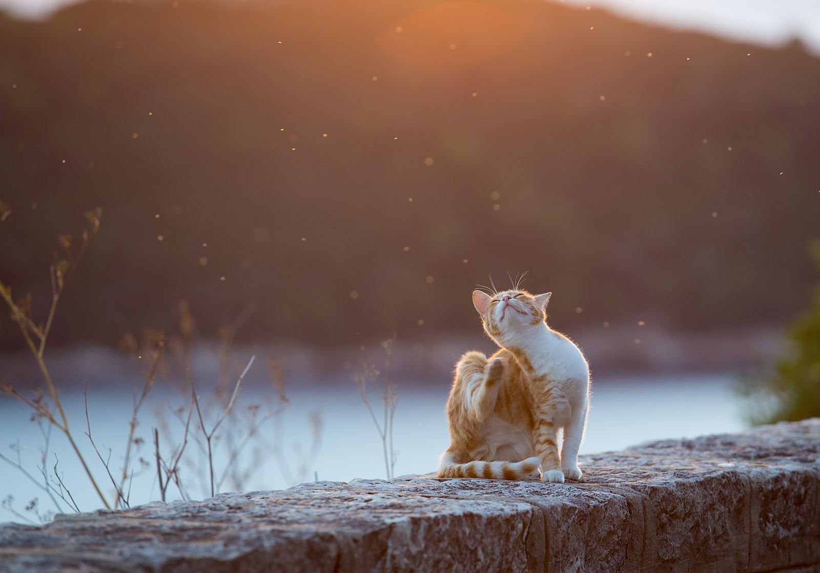 dubrovnik cat at sunset