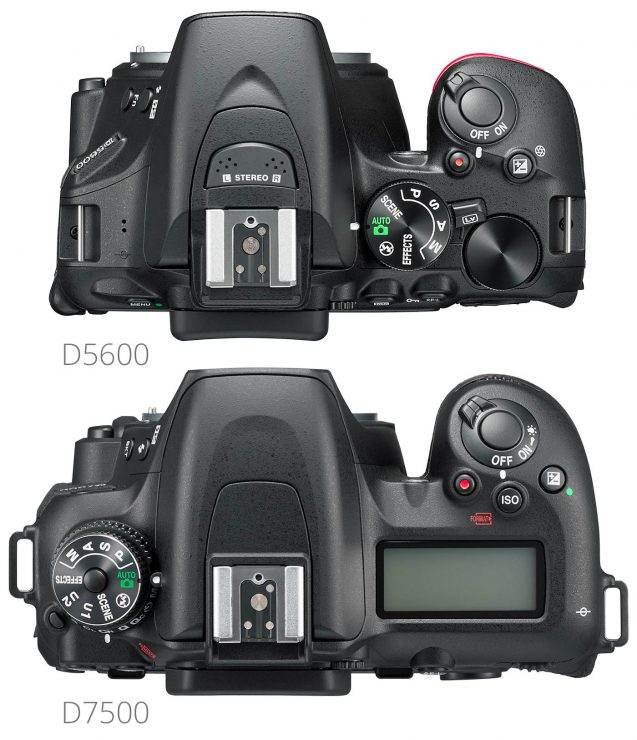 Overhead view of Nikon D5600 and D7500.