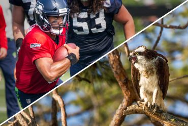 Ospreys and Seahawks: A Cursory Review of the Sigma 150-600 C Lens