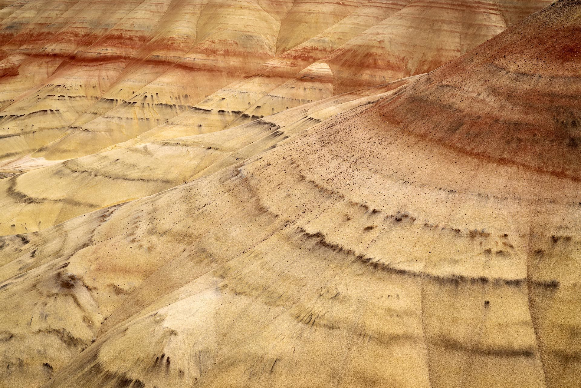 painted hills from the overlook trail