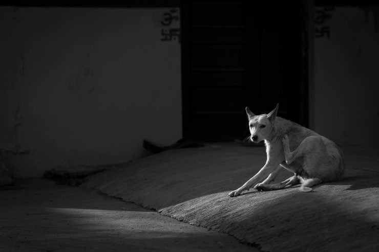 A dog scratches in an evening sunbeam in Indore, India