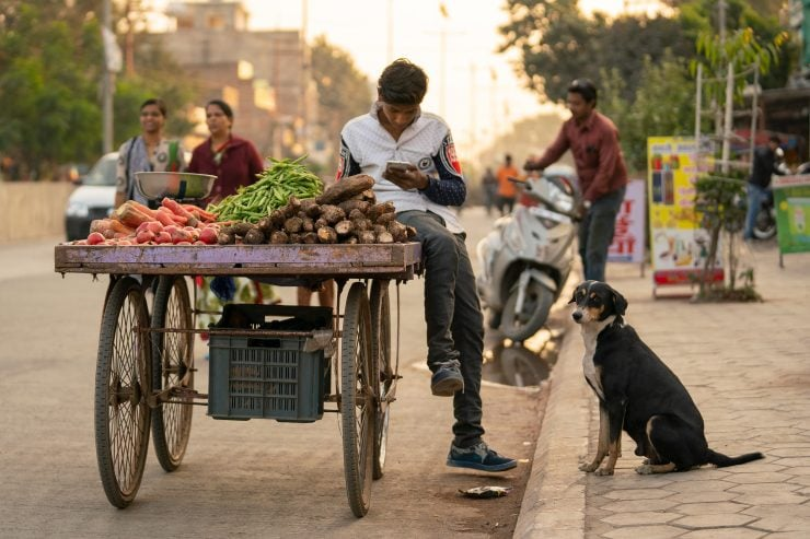 A dog begs from a boy with a vegetable cart