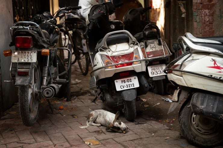 A dog chews a bone behind parked mopeds