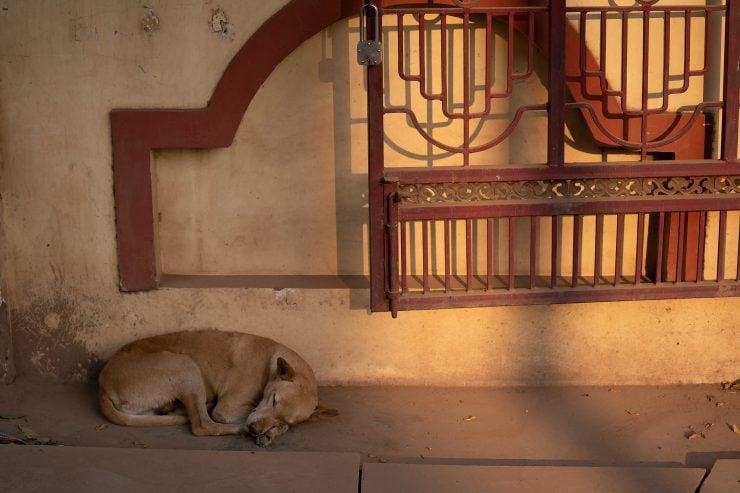 A dog sleeps near a metal gate
