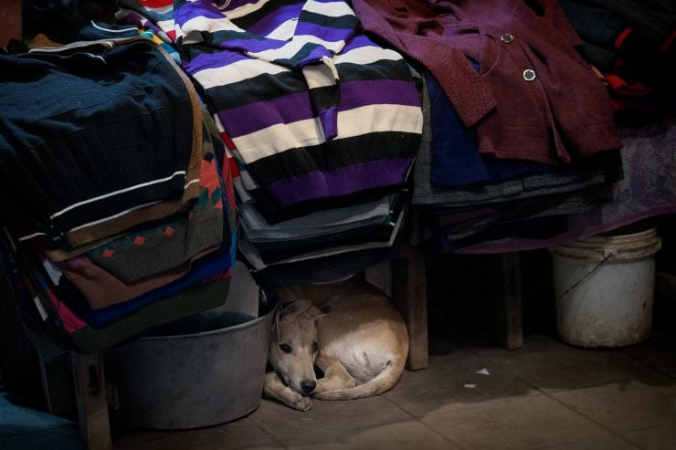 Photo of a dog curled up under a table displaying sweathers in Amritsar, Punjab