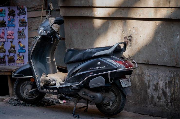 A puppy sleeping on a moped platform