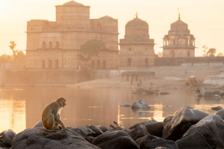 monkey on betwa river bank, orchha india